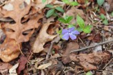 Forest Flower 2