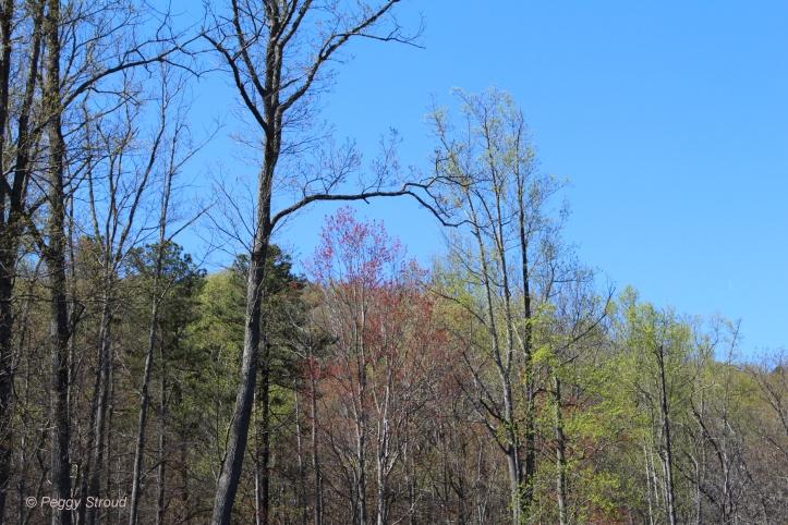 Trees Budded