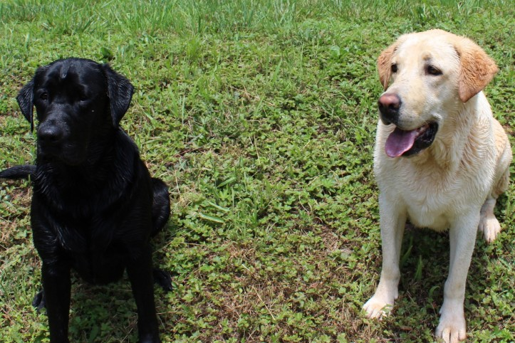 Pups Ready
