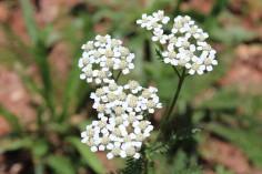 Weed Flower 2