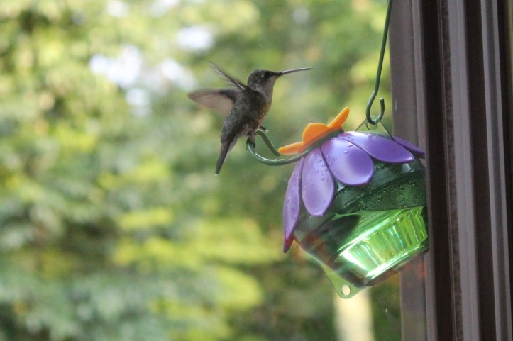 Humming Bird Wings
