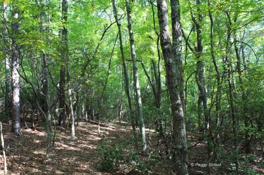 Trail Woods