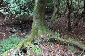 Tree at Stream